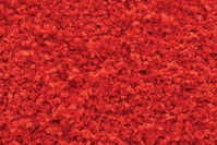 Darń - Tr Red Fall Coarse Turf